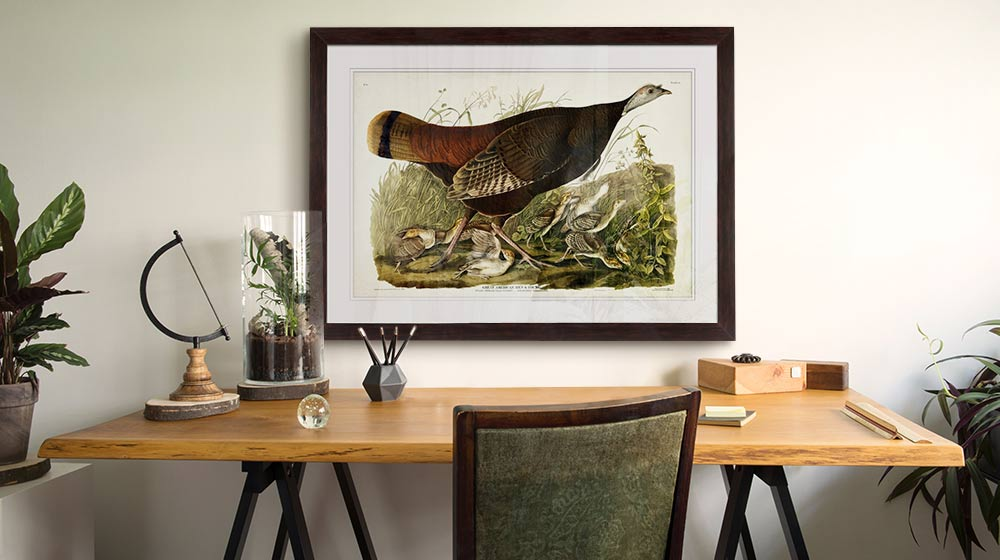 Vintage bird framed print in a classic and stylish home office